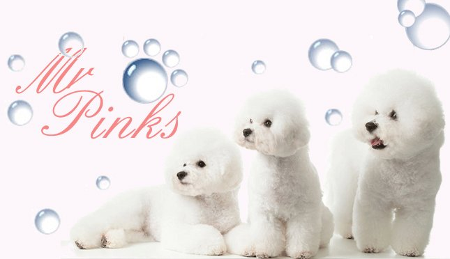 Mr Pinks Pampered Pets