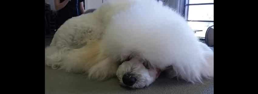 Lavender Dog Grooming