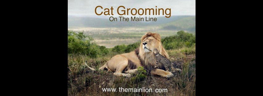 The Main Lion Cat Grooming Salon