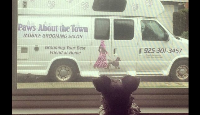 Paws About the Town