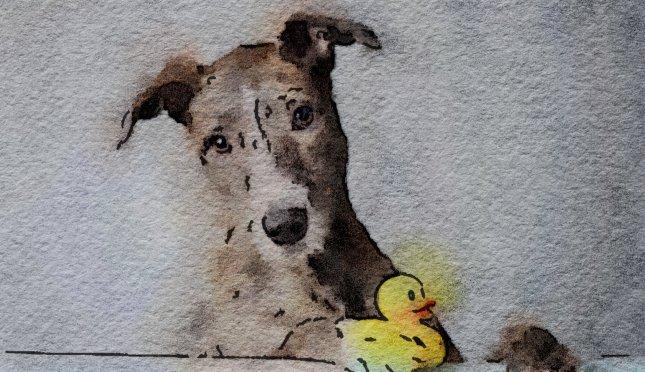 Scrub a Pup Pup