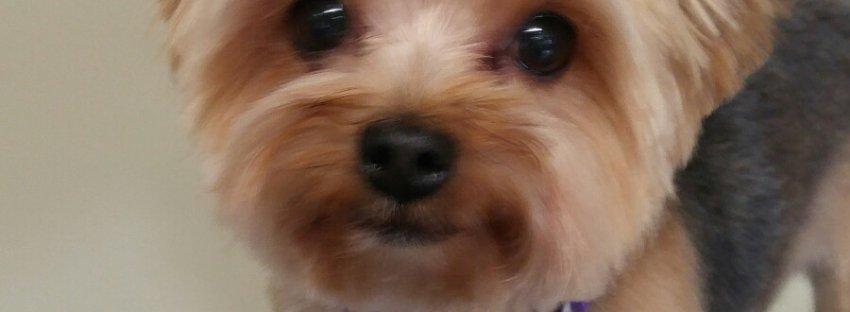 Best Of Breed Pet Salon & Pawtique