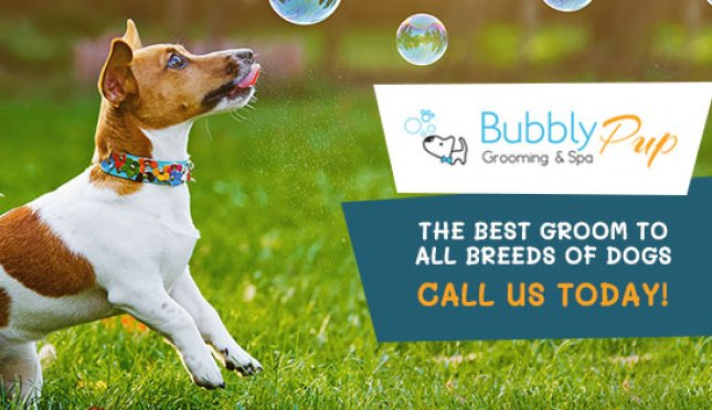Bubbly Pup Grooming & Spa